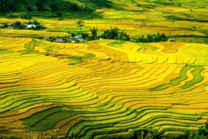 rice-terraces-214725